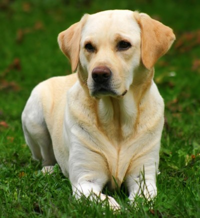 how to know when to euthanize a dog with cancer